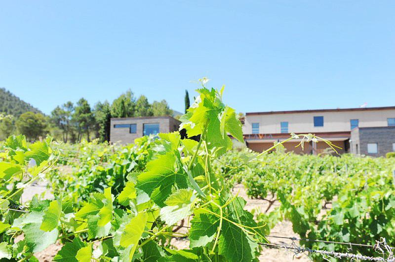 31928_bullas-wine-route-bodegas-lavia_4_large