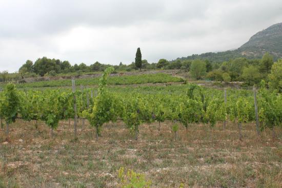 Baronia del Montsant1